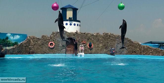 Дельфины с шарами