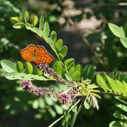 Бабочки – порхающие цветы