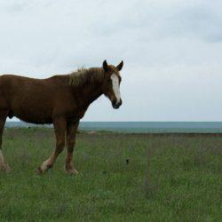 Год Лошади – год дальних путешествий!