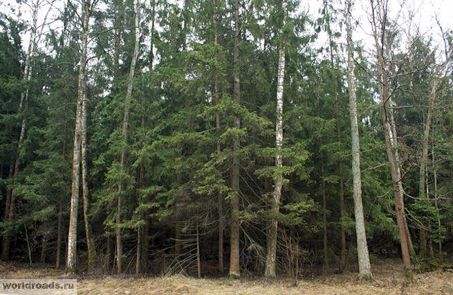 Лес на обочине