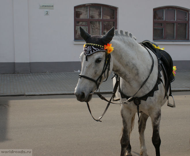 Лошади Суздаля