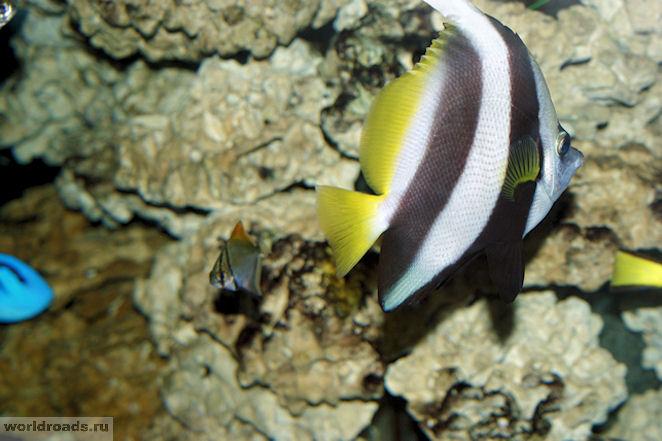 Геленджик океанариум