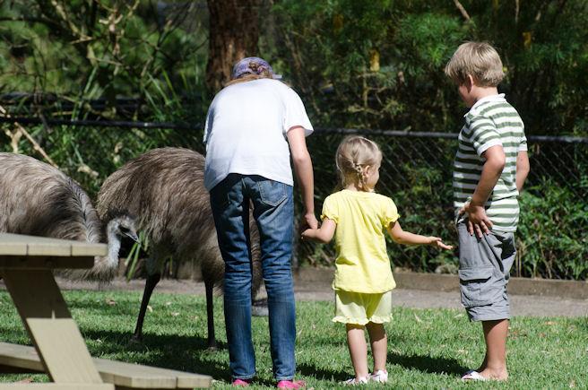 Страусы в Австралии