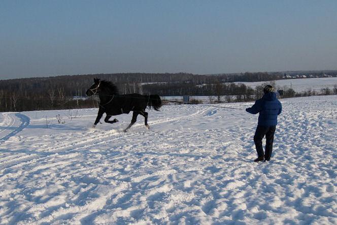 Лошадь на снегу