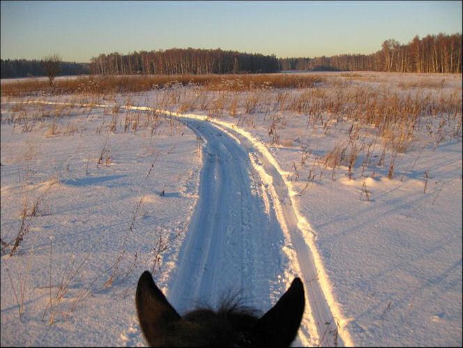На лошади по снегу