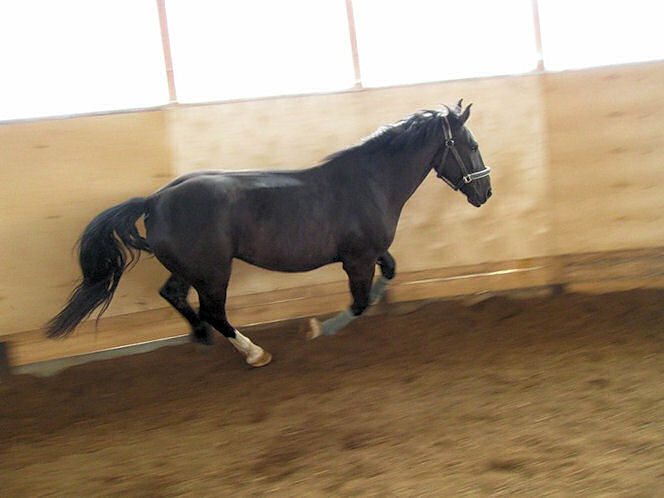 Лошадь в галопе