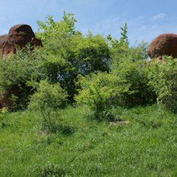 Парк Красные Грибы в Кисловодске