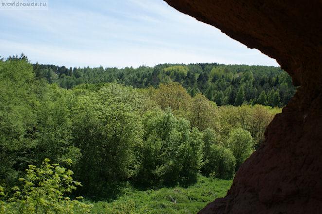 Красные грибы Кисловодск