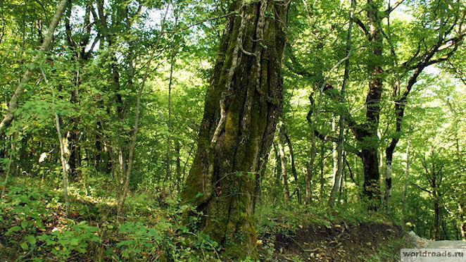 Необычные деревья