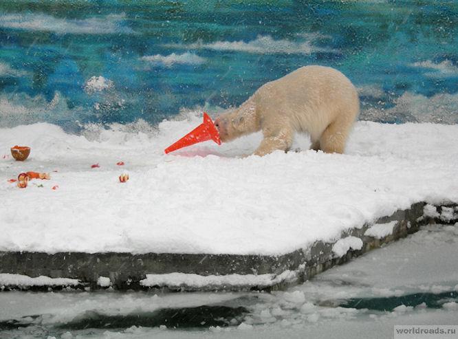 Белый медведь