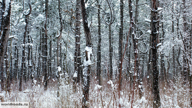 Щепкинский лес