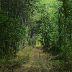 Донские леса: путешествие в Донлесхоз