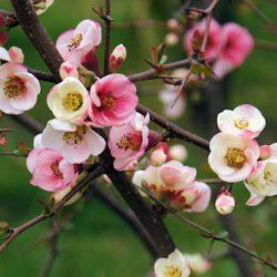 Цветущий дендрарий Сочи в марте