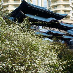 Японский сад Сочи в марте
