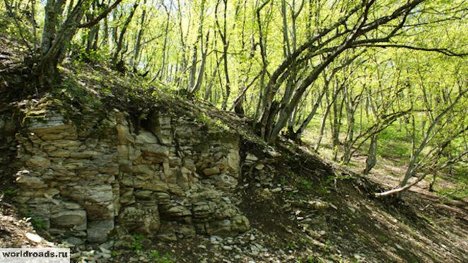 Лес на Машуке