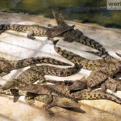 Парк миллионолетних камней и крокодиловая ферма Паттайи