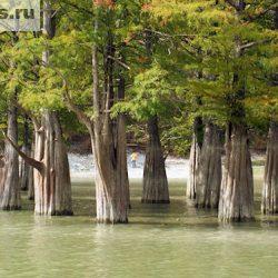 Озеро Сукко с болотными кипарисами