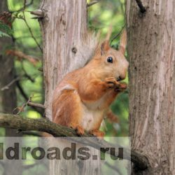 Курортный парк Кисловодска: маршрут № 1