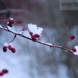 Зимний ботанический сад Ростова